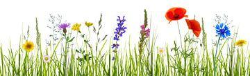 kleurrijke bloemenweide in de zomer van Dörte Stiller