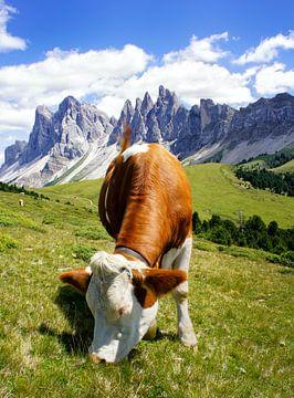 Südtirol Kuh auf der Alm von Martina Weidner