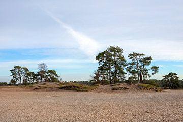 Baumreihe in den Dünen von Edwin Butter