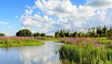 Kleurige bloeiende planten in een natuurgebied. van Ruud Morijn