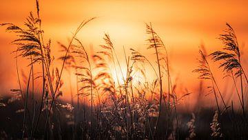 Sonnenuntergang von Martijn van Dellen