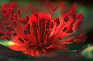 Blumendetail  von Violetta Honkisz