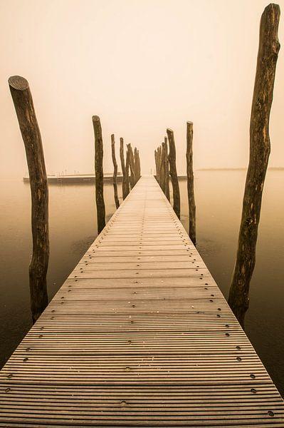 Zwemsteiger in de mist