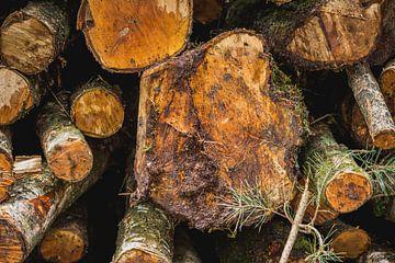 Gestapelde boomstronken van Stedom Fotografie