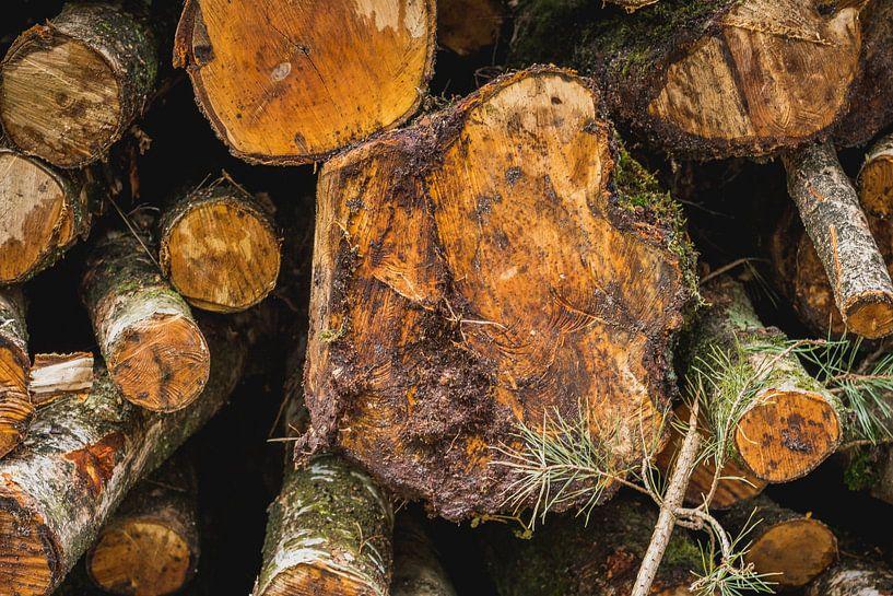 Gestapelde boomstronken van Koop je Canvas