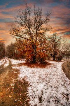 Einsamer Baum von Konstantinos Lagos