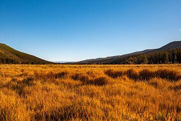 Golden Colorado, VS van Guenter Purin