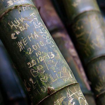 Bambus Kunst von Angelique Faber