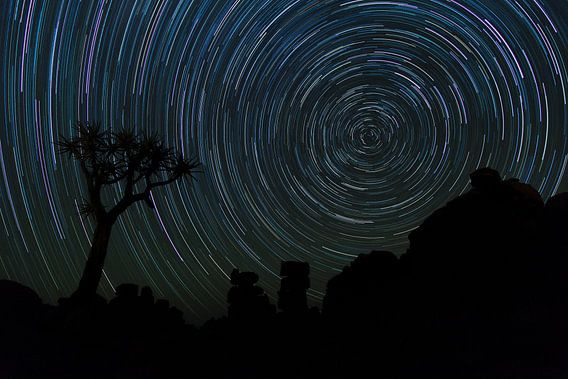 Startrail Kokerbomen bos, Namibia