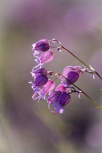 Delicate bloesemdroom van Renate Dohr
