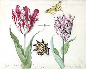 Twee tulpen met schelp, waterjuffer en vlinder, Jacob Marrel - 1639