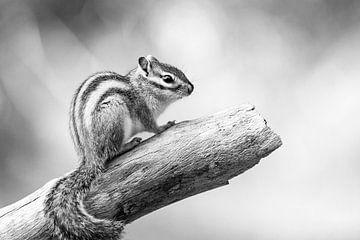 Porträt eines Eichhörnchens in Schwarzweiß von Evelien Oerlemans