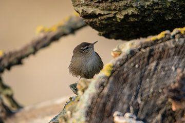 Vogeltje op een boomstronk van Marcel Alsemgeest