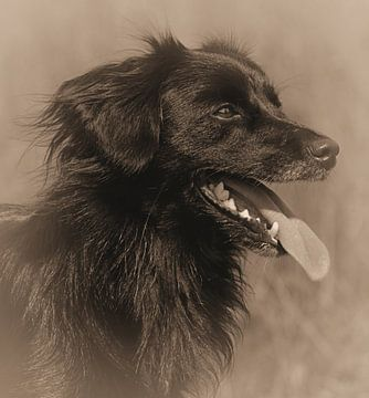Zwarte Hond (sepia) van Leo Huijzer