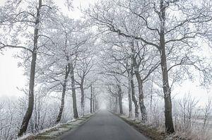Bevroren bomen