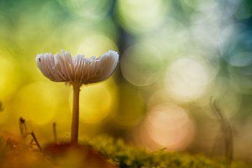 Betoverende paddenstoel (kleur versie)
