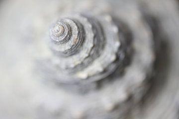 Fossiele slak uit de toren - zachte schoonheid - van Jiri Viehmann