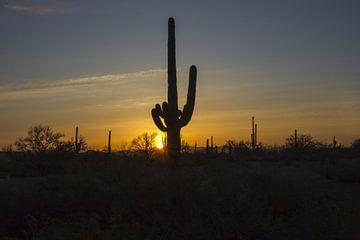 Cactus, Tequila Sunrise van martin von rotz