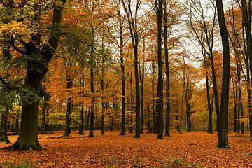 Herfst op de Amerongse berg, Nederland van Bart van Dam