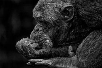 Chimpansee zit te denken. von Renate Peppenster