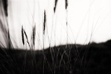 Tranquility II von Insolitus Fotografie