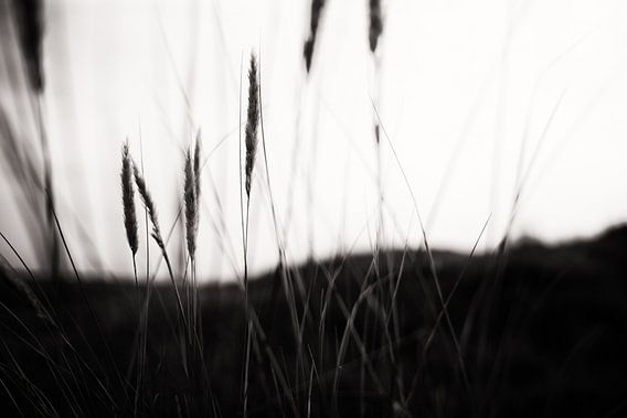 Tranquility II van Insolitus Fotografie