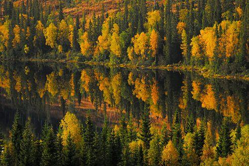 Herfstkleuren in Zweden van Jaap La Brijn