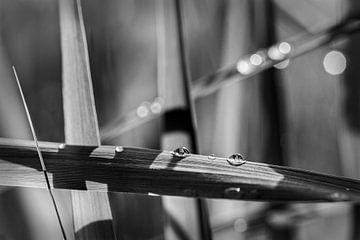 Wassertröpfchen von Rob Boon