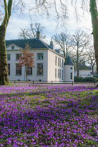 Laat de lente maar komen. van Jaap Burggraaf