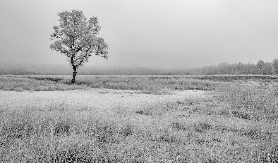 Berijpte bomen in winters landschap
