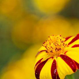 Rot-gelbe Blume von Anneke Hooijer