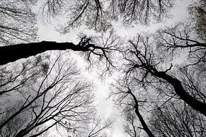 Bomen,Trees, Bäume,  Arbres