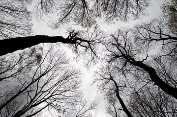 Bomen,Trees, Bäume,  Arbres von Kitty Stevens
