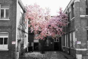 Magnoliaboom van Marcel Ethner