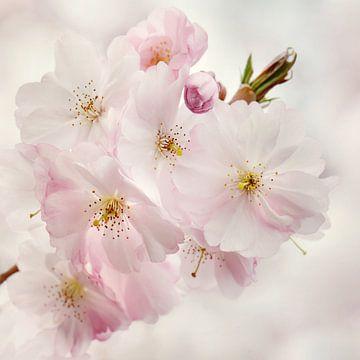Frühling von Violetta Honkisz