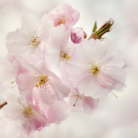 Spring van Violetta Honkisz
