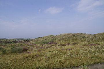 Duin terrein van Ad Steenbergen