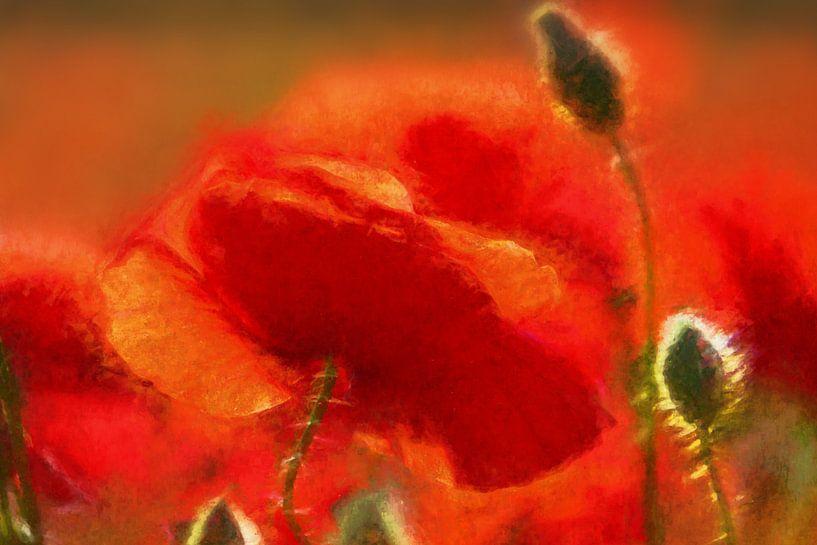 Poppy 2020 von Andreas Wemmje