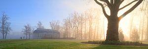 Mysterieuze ochtend in het park van