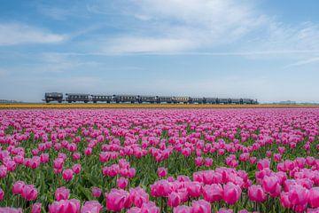 Trein door tulpenveld van Moetwil en van Dijk - Fotografie