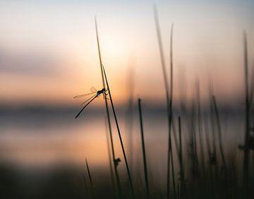 Libellen und Mosaikjungfern Teil 7 von Tania Perneel
