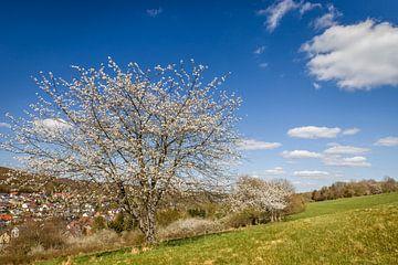 Frühlingswind in den Kirschbäumen van Christian Müringer
