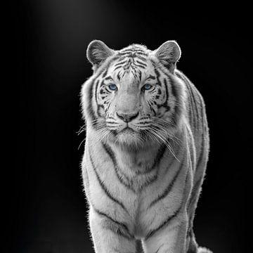 Tigre blanc aux yeux bleus sur fond sombre sur Irma Heisterkamp