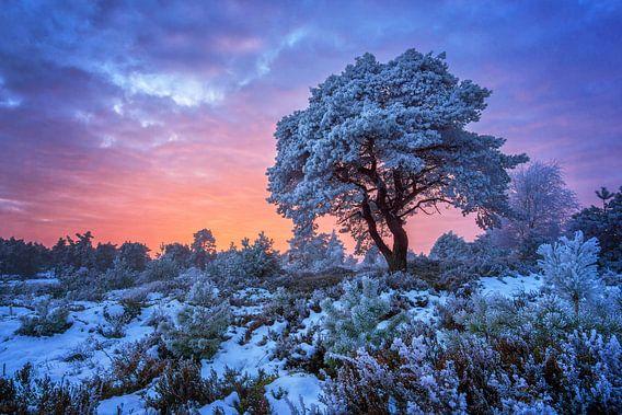 Holterberg met rijp en sneeuw