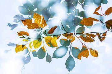 Herfstkleuren van Sam Mannaerts Natuurfotografie