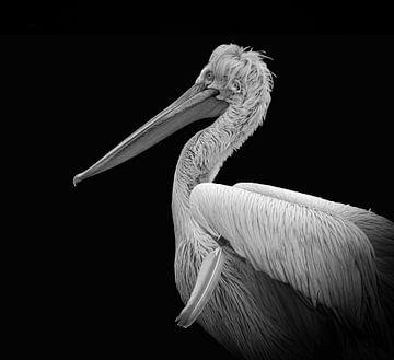 Pelikan-Porträt in Schwarzweiß von Marjolein van Middelkoop