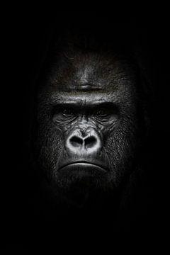 Gesicht im Dunkeln. Porträt eines kräftigen dominanten männlichen Gorillas (Physiognomie), strenges  von Michael Semenov