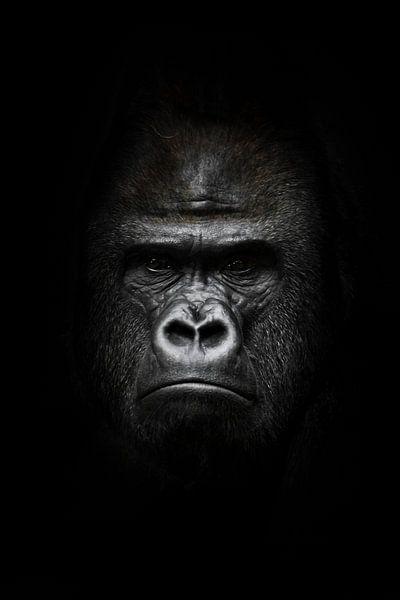 gezicht in het donker. Portret van een krachtige dominante mannelijke gorilla (fysionomie), streng g van Michael Semenov