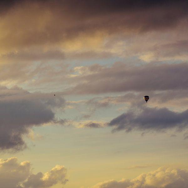 Chasing birds van Dick Nieswaag