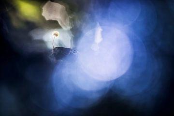 Blau von Bob Daalder